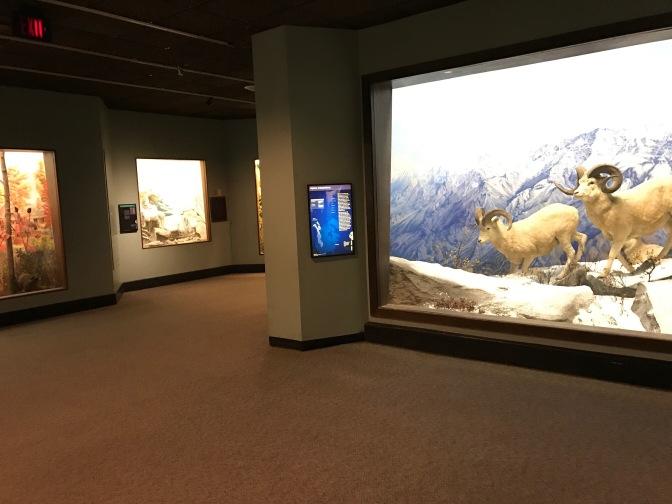Dioramas in museum.