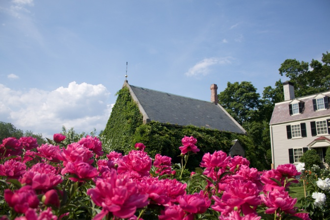 Pink flowers, with Peacefield and Library in background.