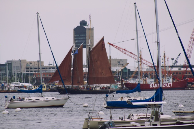 Schooner Roseway making its way through a crowded harbor.