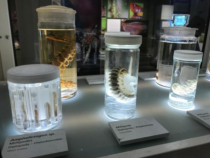 Arthropods in glass jars.