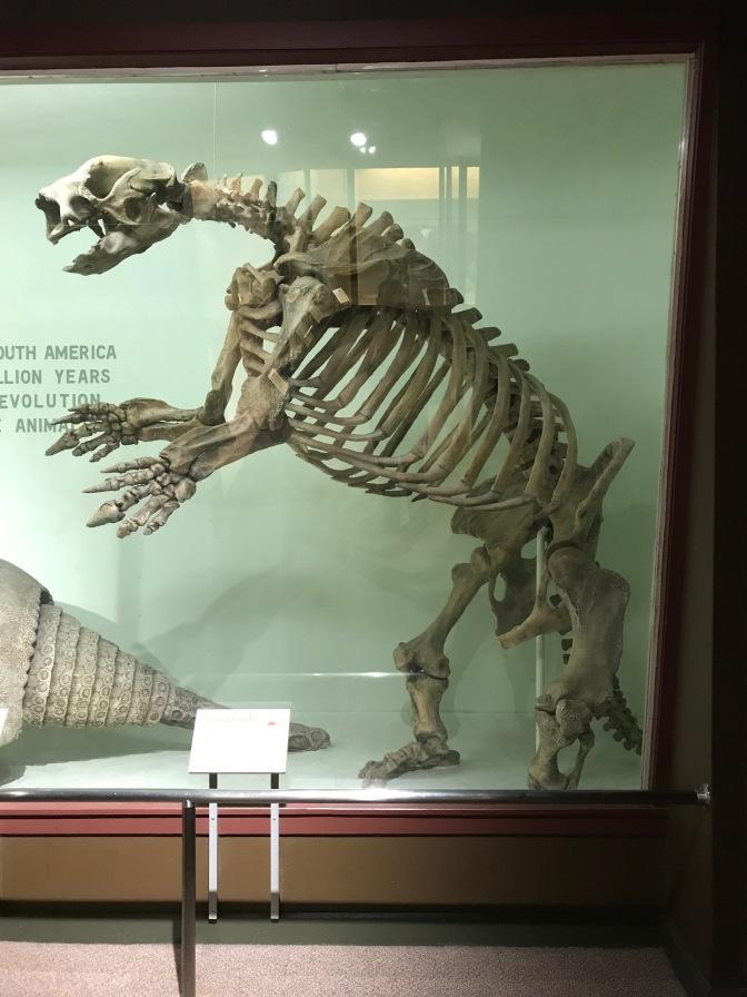 Skeleton of a Giant Sloth.