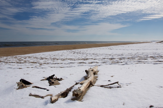 Driftwood on a snow-covered beach.