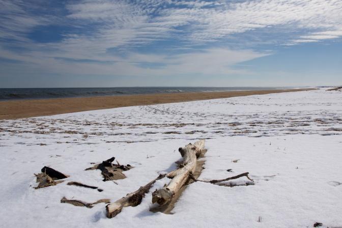 Driftwood on a snow-covered beach.