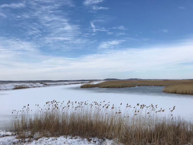 Frozen salt marshes with tall grass in foreground.