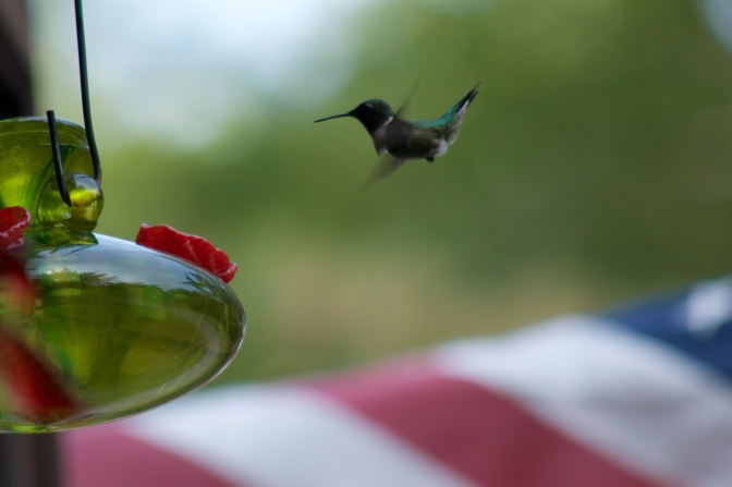 Hummingbird approaching feeder. An American flag flies in the background.