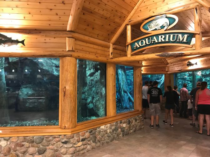 View of aquarium in the store.