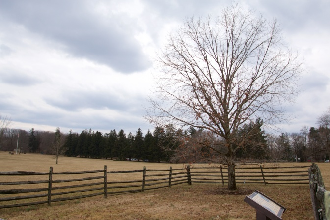 Tree, surrounded by wooden fence, in battlefield.