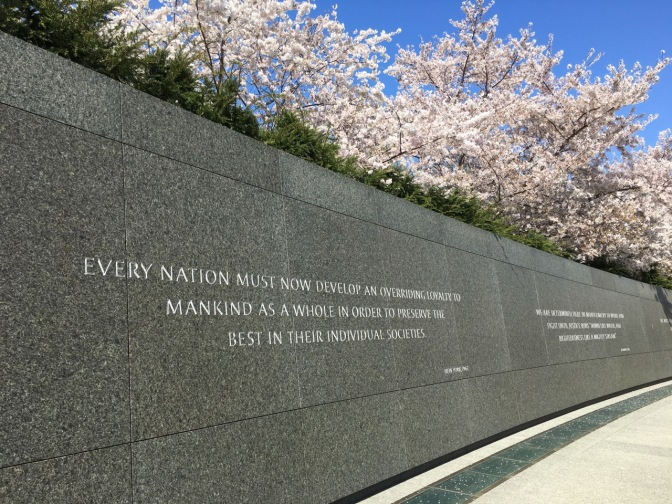 Cherry Blossoms above the Martin Luther King, Jr. Memorial.