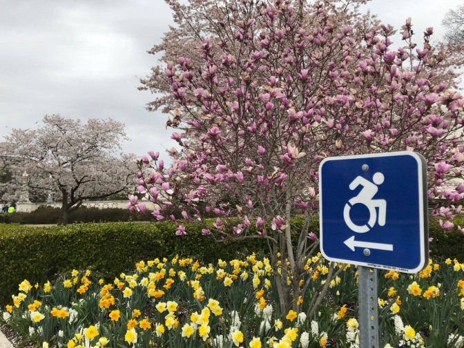 New handicapped logo on a sign, beside cherry blossoms and daffodils.
