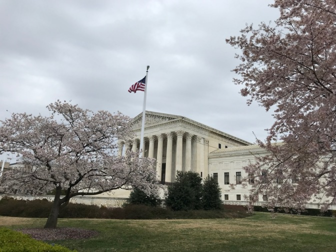 U.S. Supreme Court building, with cherry blossom trees in the foreground.