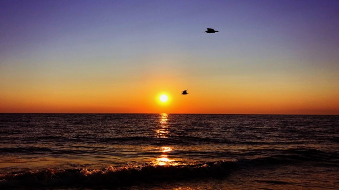Birds flying in sky past ocean sunset.
