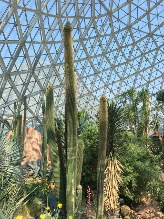 Cacti beneath dome.
