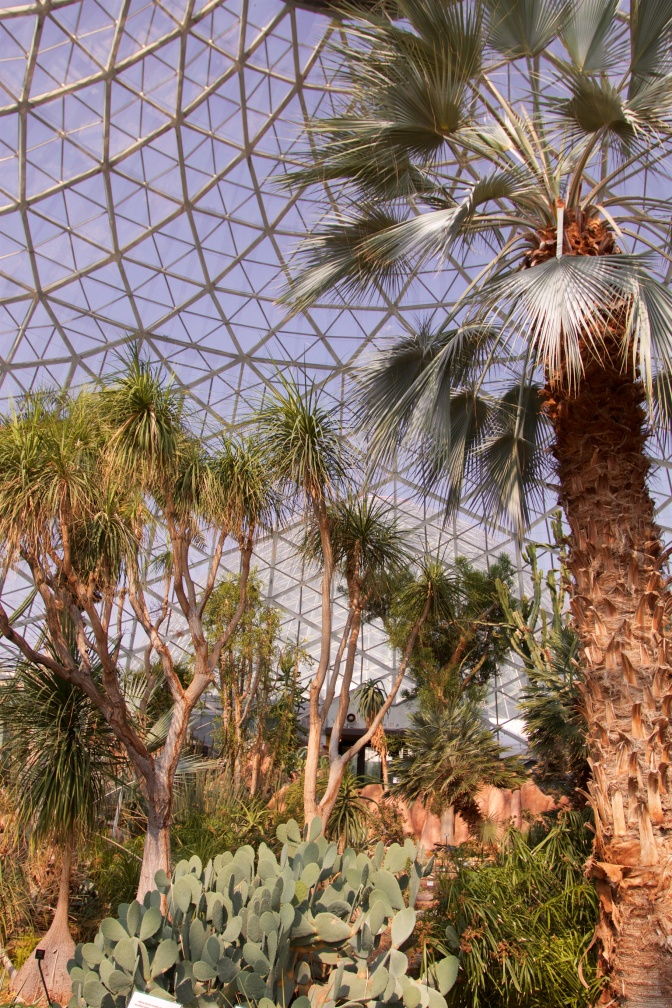 Interior of the Arid Dome, with cacti and desert trees.