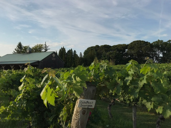 Vines of vineyard with sign on signpost that says CABERNET SAUVIGNON. A wooden building is in the background.
