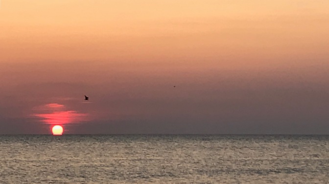 Sunset photo of ocean with sun low in horizon and two birds in distance.