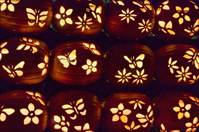 Twelve pumpkins in three rows of four, with butterflies and flowers carved into them.