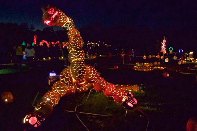 Dragon made of pumpkins.