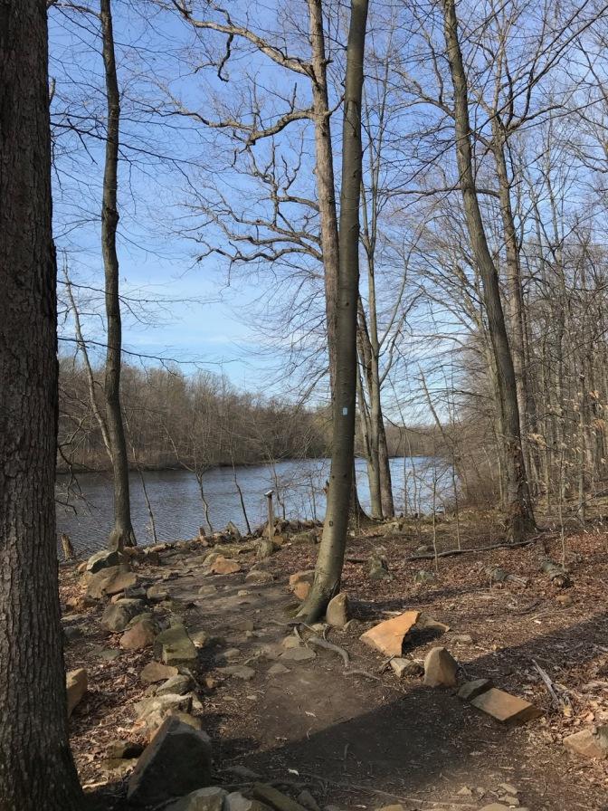Photo of small path along trail.