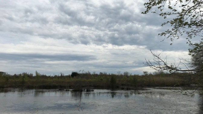 View of Helmetta Pond.