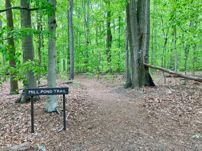 Forest path with sign by entrance that reads MILL POND TRAIL