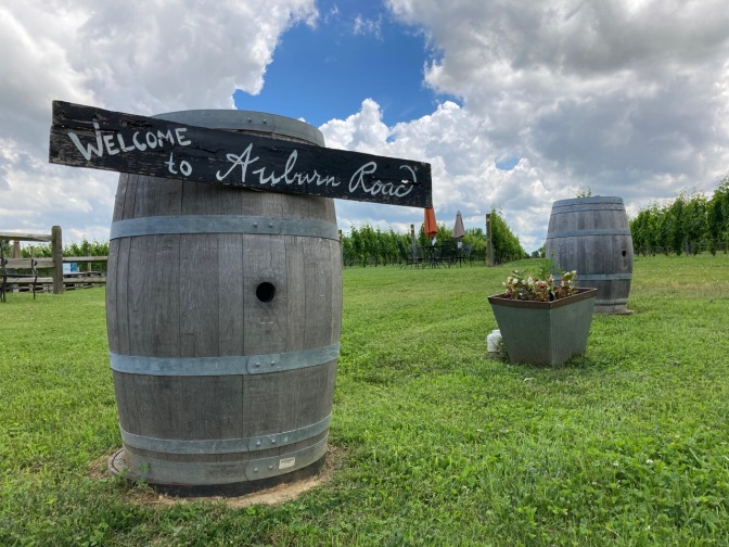 Wine barrel in front of vineyard, with sign that says WELCOME TO AUBURN ROAD.