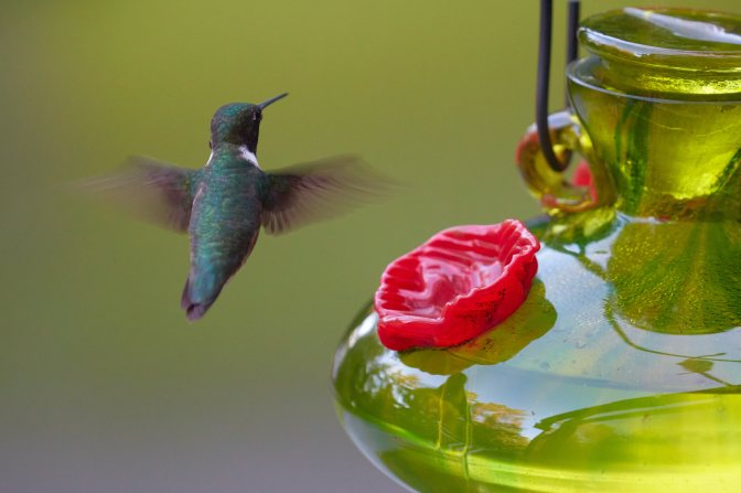 Humming bird flying next to feeder.