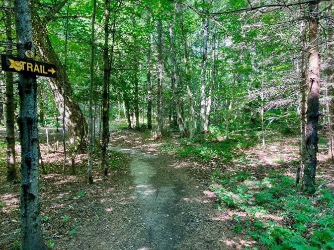 View of Moss Lake trail.