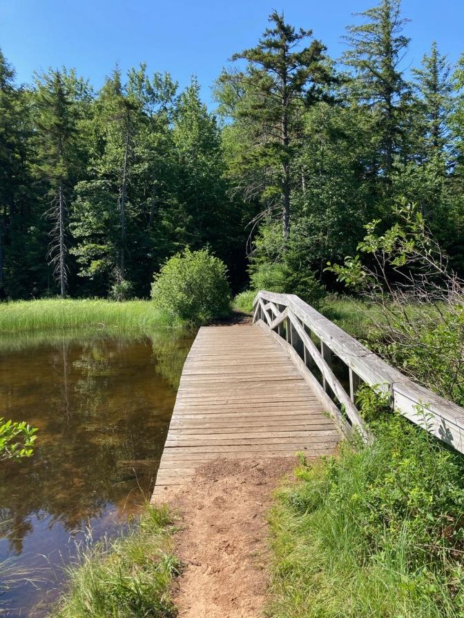 View of wooden bridge over lake.
