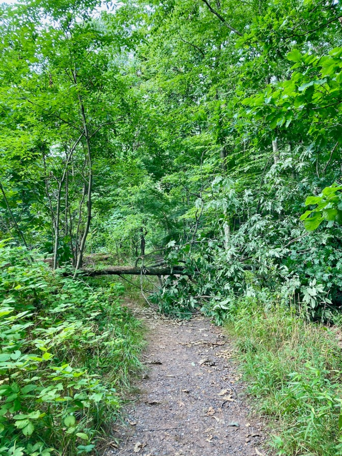 Hiking path in woods, with fallen tree blocking the path.