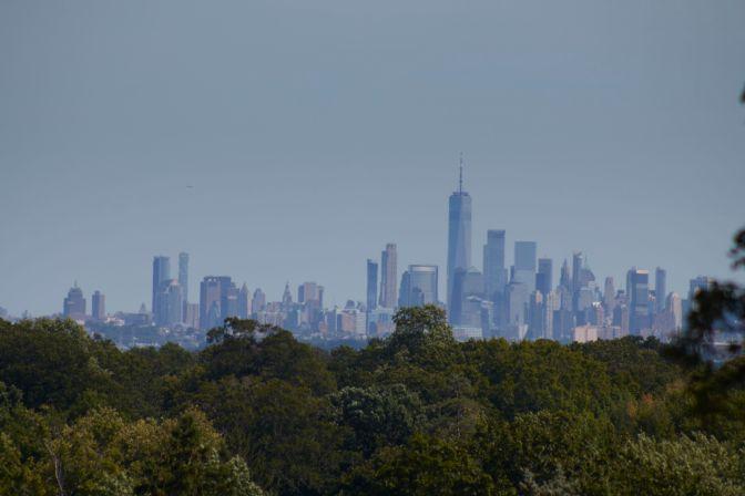 View of New York skyline beyond tree line.