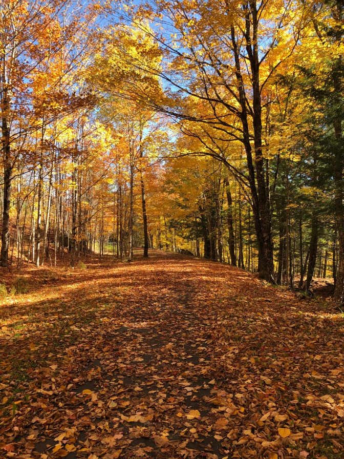 Leaf-covered TOBIE trail, with trees filled with autumnal colors.