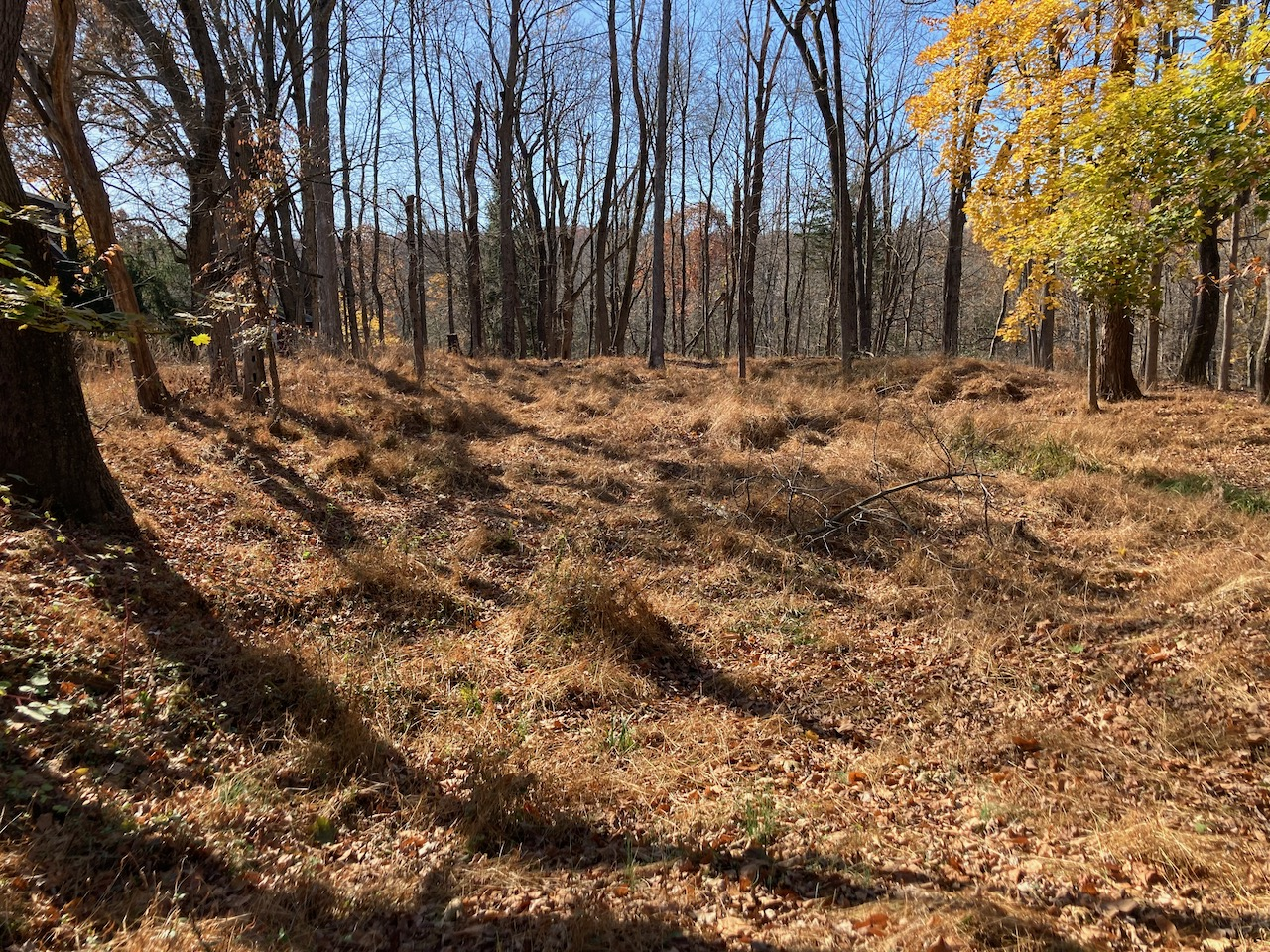 Remains of redoubt in clearing in forest.