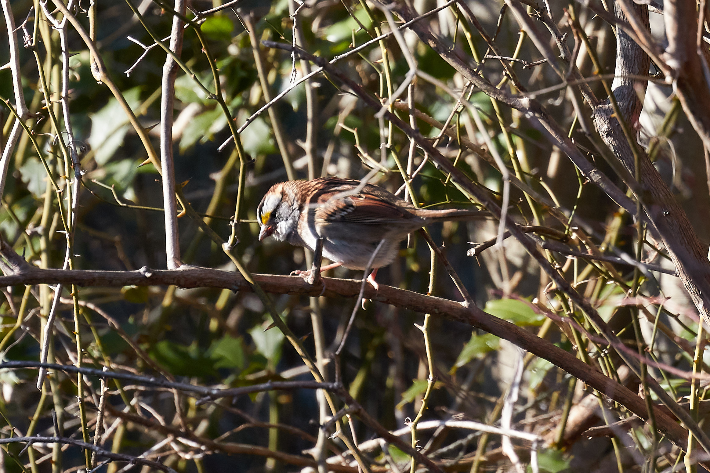 Small bird on branch, with its feathers puffed up.