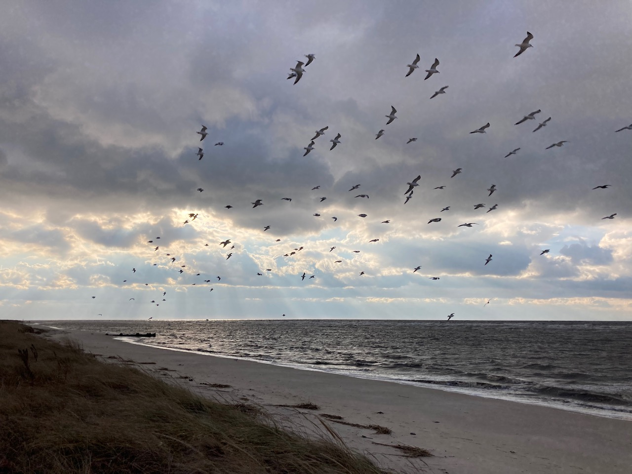 View of beach, with seagulls in air.