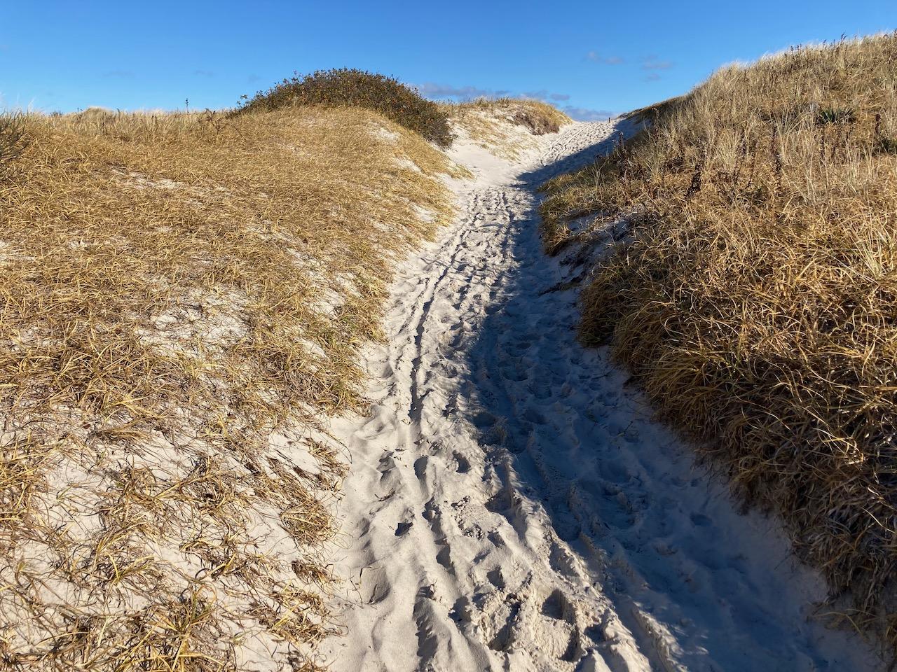 Sand path through dunes covered in beach grass.