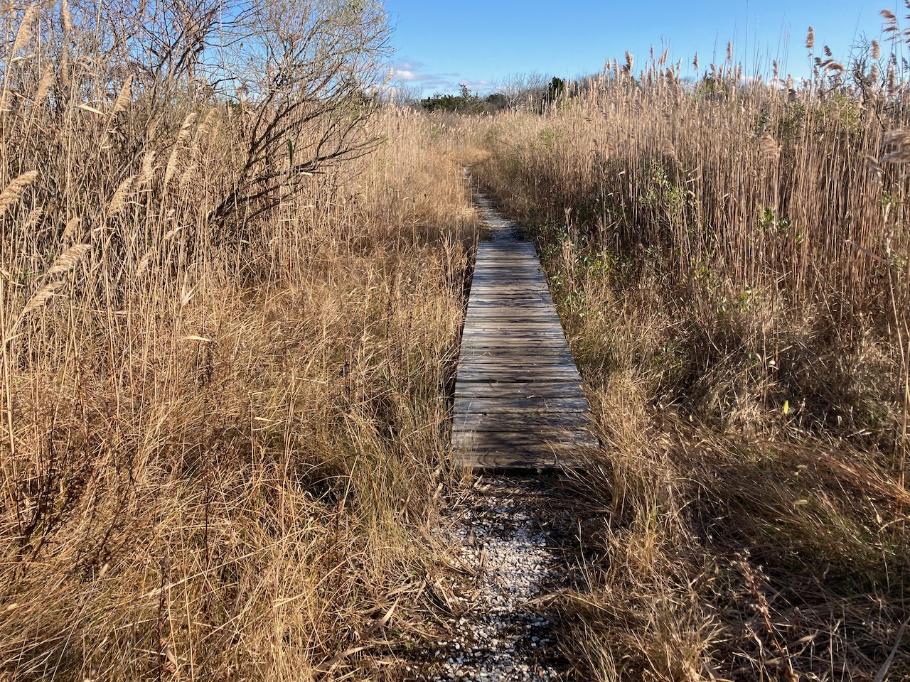 Trail and small boardwalk through marshes.