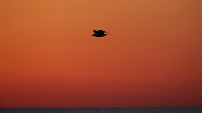 Silhouetted seagull in flight over ocean.