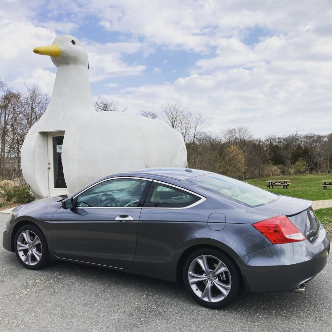 2012 Honda Accord parked in front of The Big Duck.