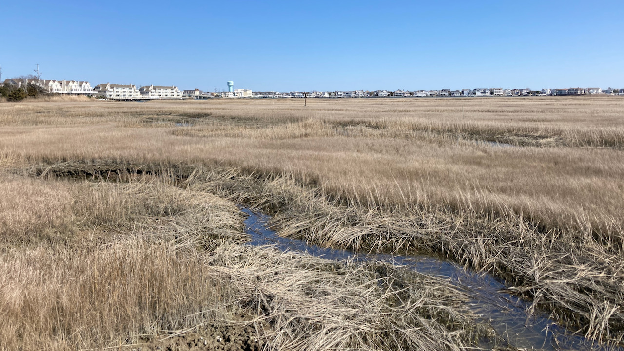 View of marshland, with city of Stone Harbor in distance,.