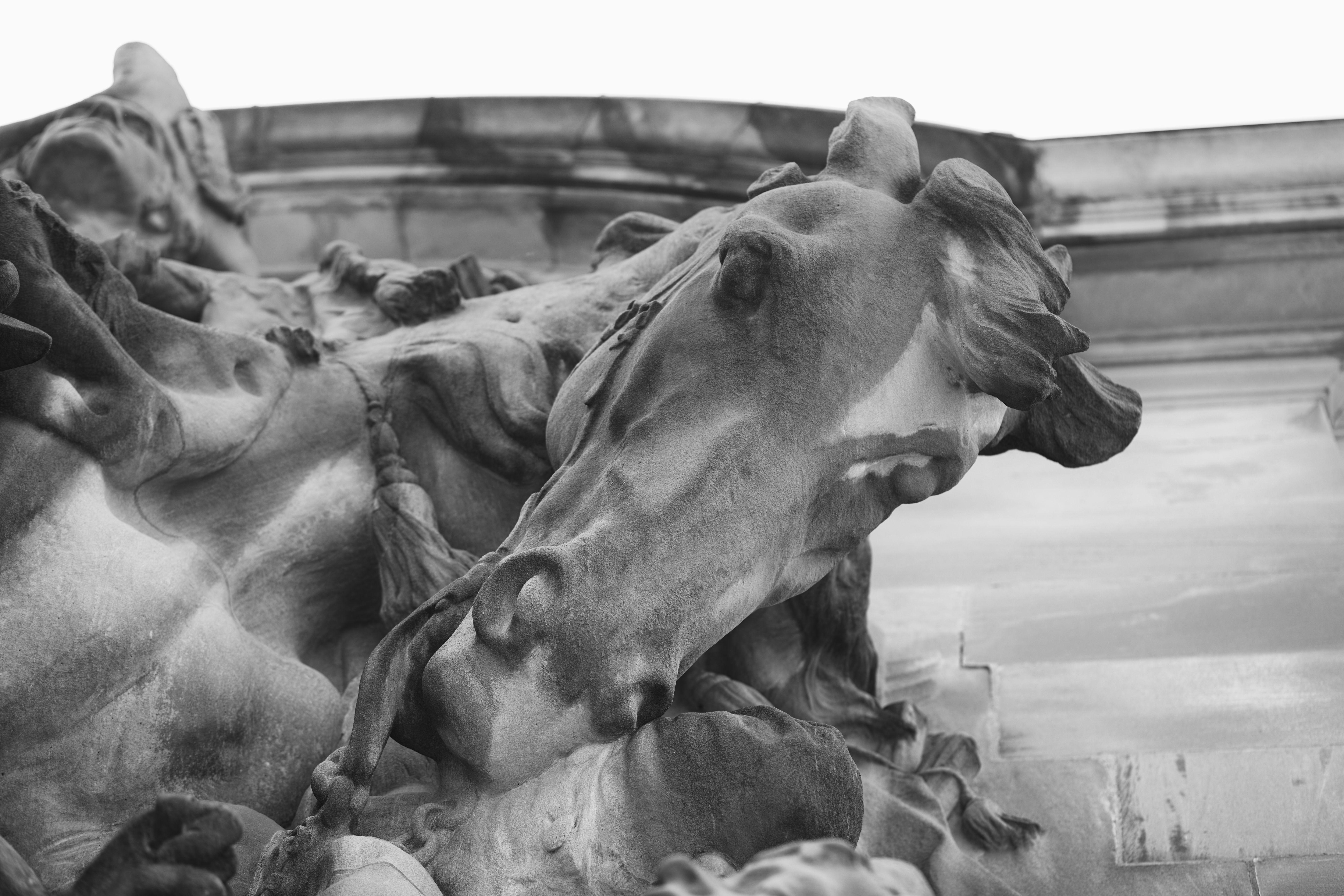 Black and white photo of George Washington's horse.