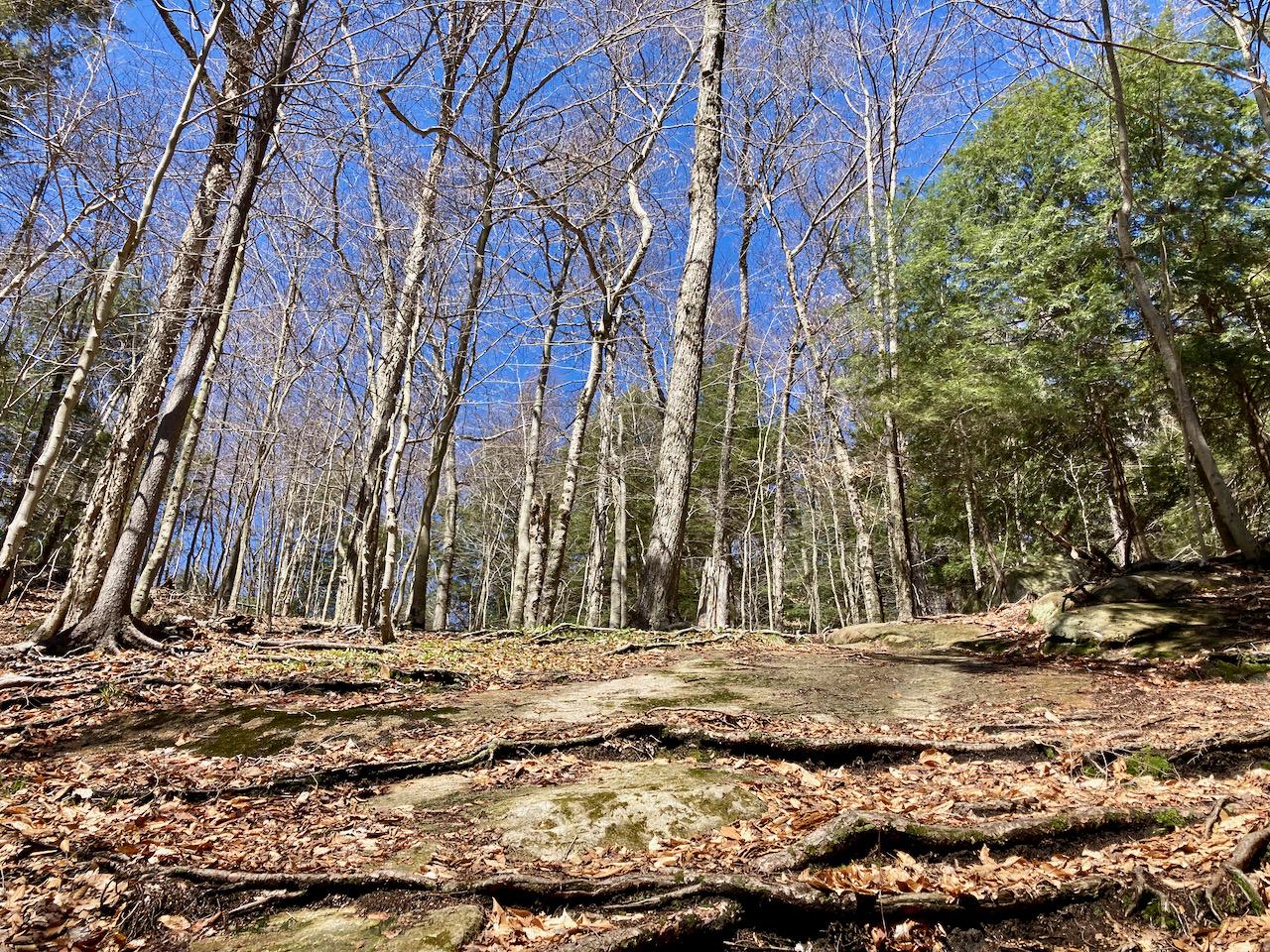 Rocky hillside in woods.