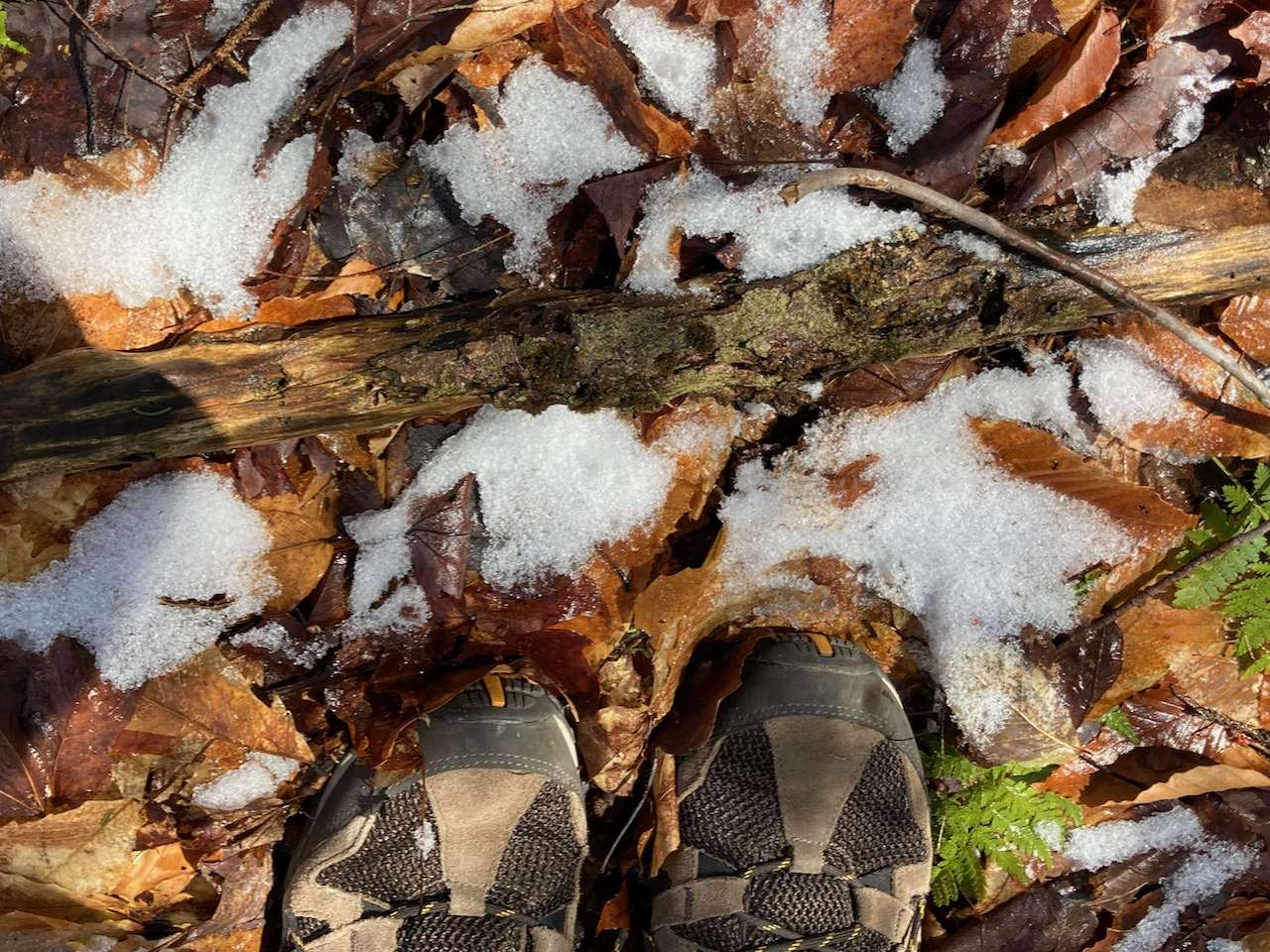 Two hiking shoes standing on wet leaves and snow.