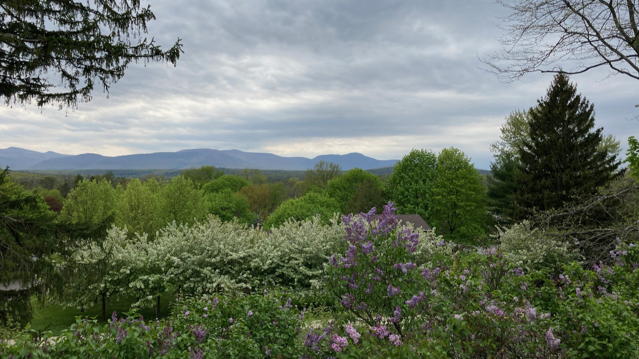 View of Catskill mountains, with flowering trees in foreground.