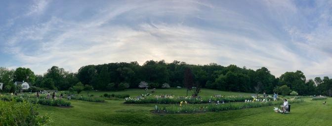 Panorama of Iris Gardens.