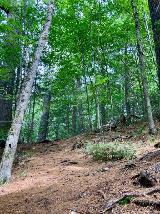 Trail in Cathedral Pines, facing uphill.