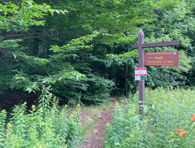 Trailhead for Cathedral Pines.