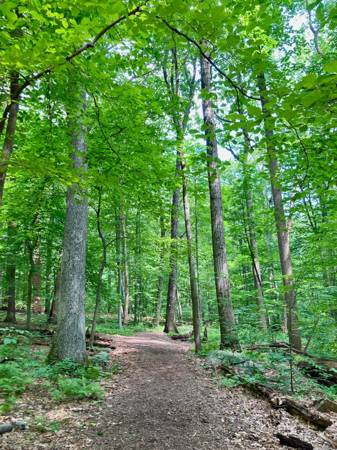 View of hiking trail through woods.