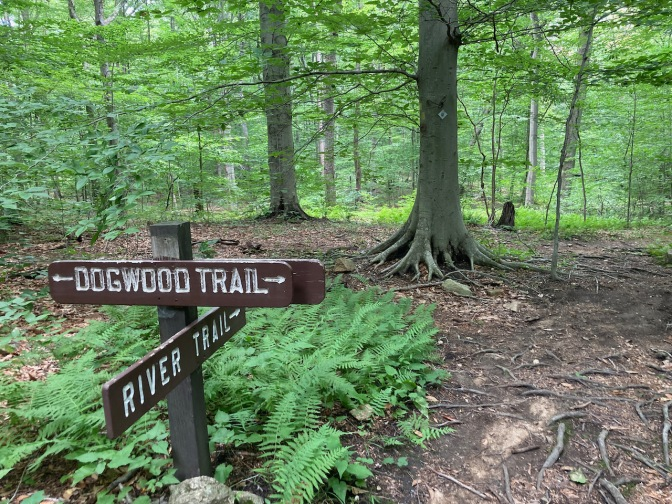 Trail signs for DOGWOOD TRAIL and RIVER TRAIL in forest.