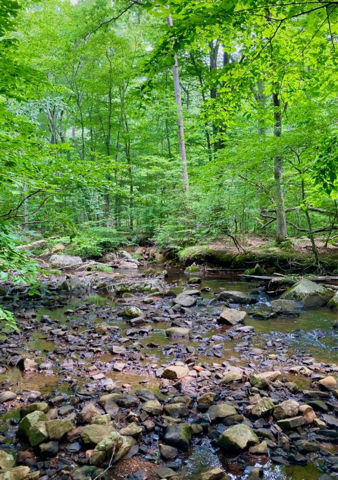 View of Passaic River through woods.