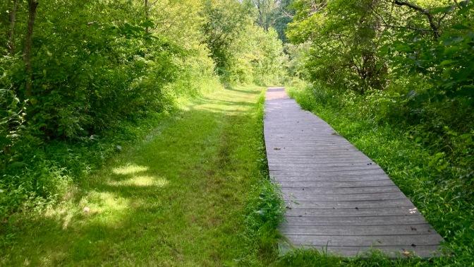 Boardwalk running through grassy trail in woods.